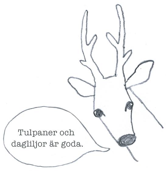 radjur_gillar_tulpaner